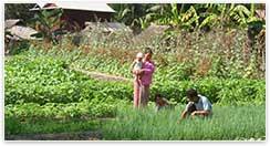 Famille cambodgienne culture vivrière
